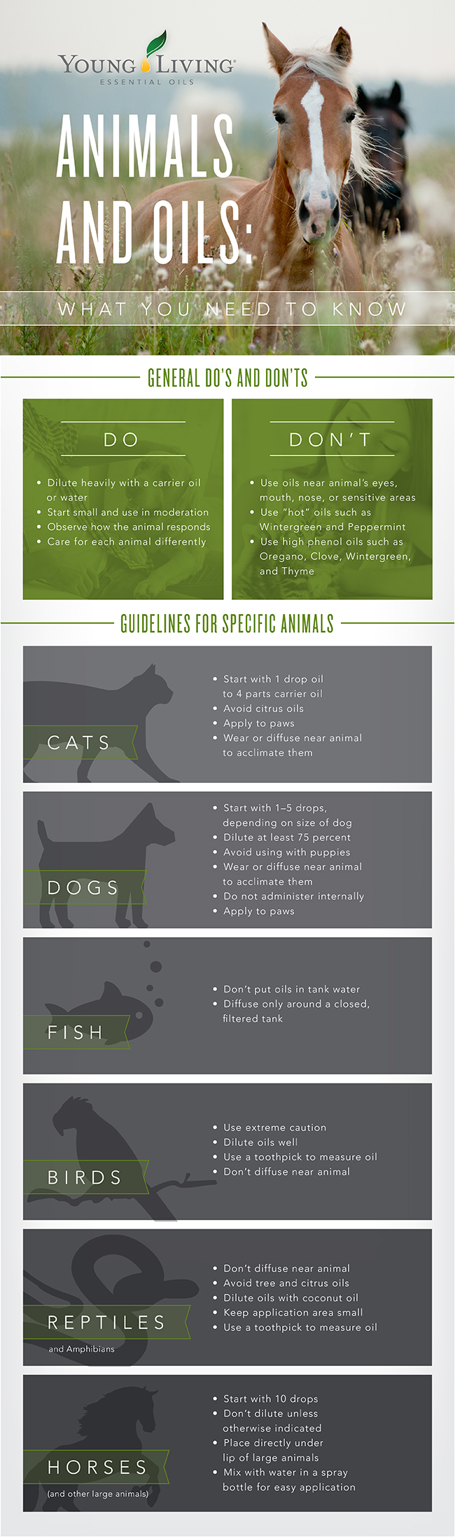 Animals-and-Pet-Infographic